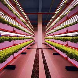 commercial led grow lights manufacturer